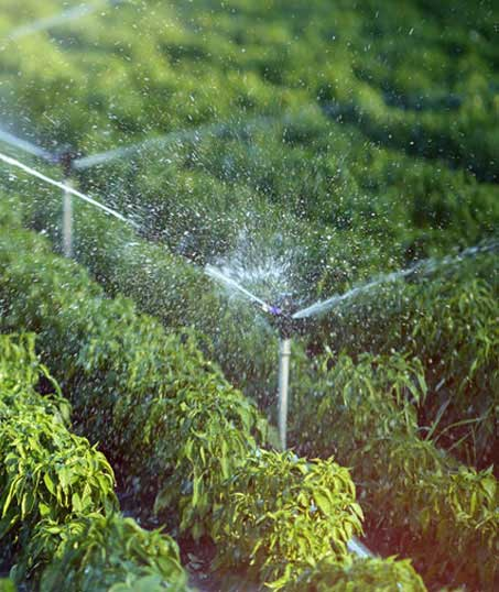 Evergreen Landscape Management LLC Commercial Irrigation System Repair