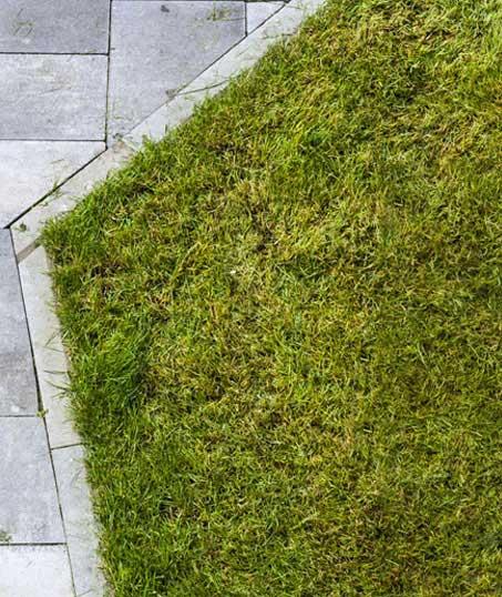 Evergreen Landscape Management LLC Commercial Lawn Dethatching