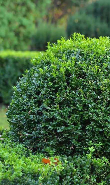 Evergreen Landscape Management LLC Commercial Shrubs & Hedges