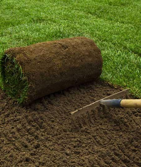 Evergreen Landscape Management LLC Commercial Sod Installation