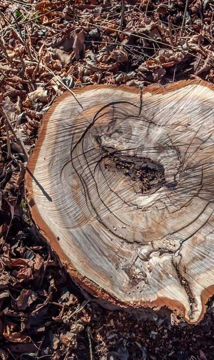 Evergreen Landscape Management LLC Commercial Tree Removal