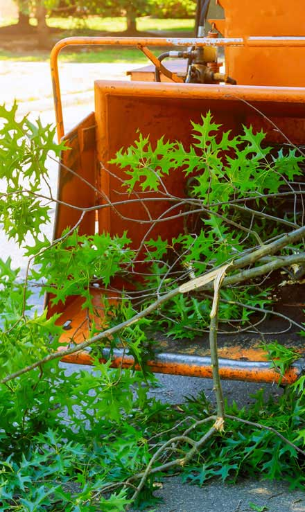 Evergreen Landscape Management LLC Commercial Tree Trimming