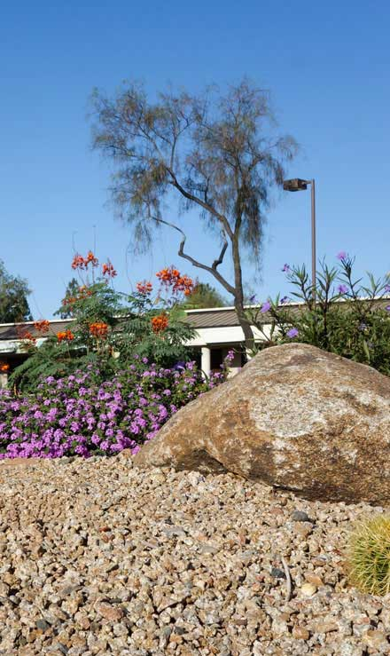 Evergreen Landscape Management LLC Commercial Xeriscaping